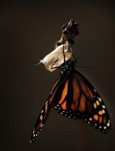 butterfly-1518060_960_720