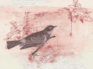 bird-635655_960_720